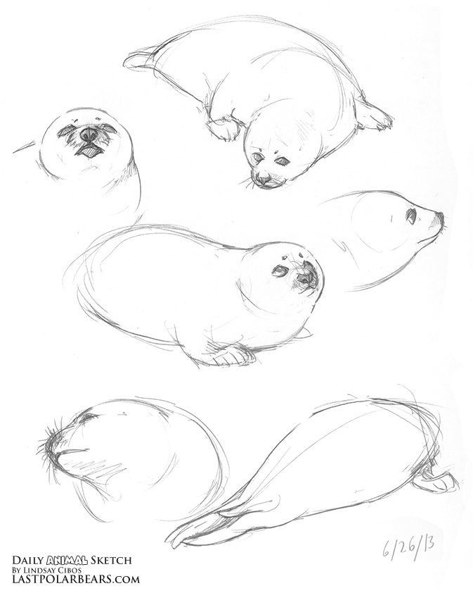 10 minute sketch: baby seal by RachelENugent on DeviantArt